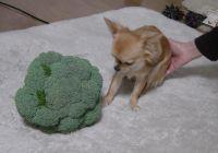 20060301broccoli1