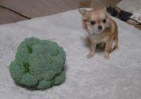 20060301broccoli2