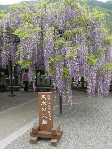 20060502fuji1